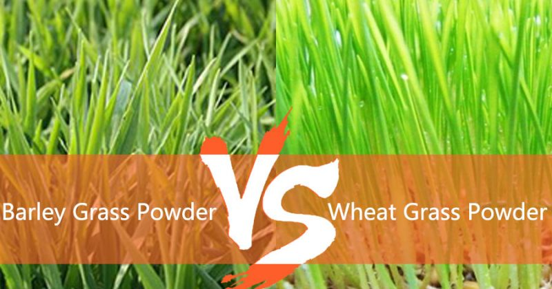 What is the difference between organic barley grass and wheat grass powder?